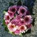 soft-pink-gerbera-and-roses